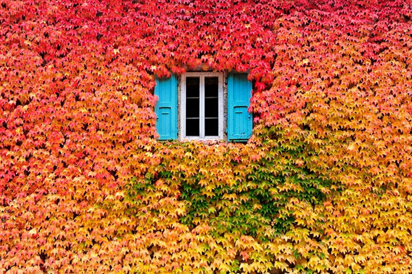 autumn-photo-5-A-wall-of-fall