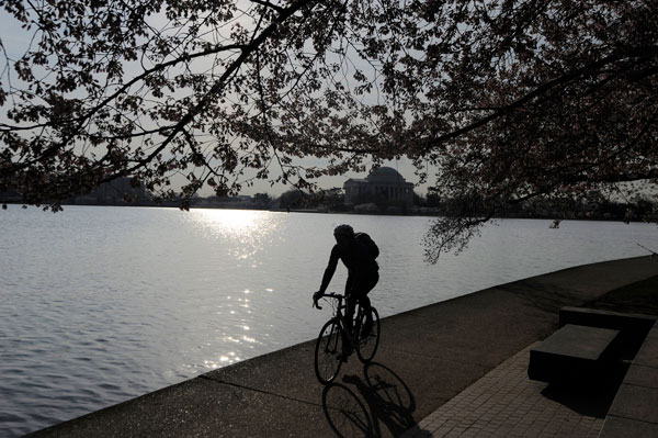 A-cyclist-rides-along-the-Tidal-Basin-under-cherry-trees