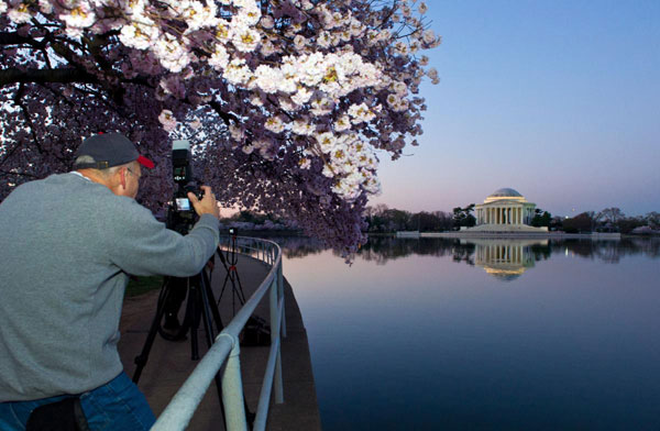 A-man-photographs-cherry-trees-and-the-Jefferson-Memorial