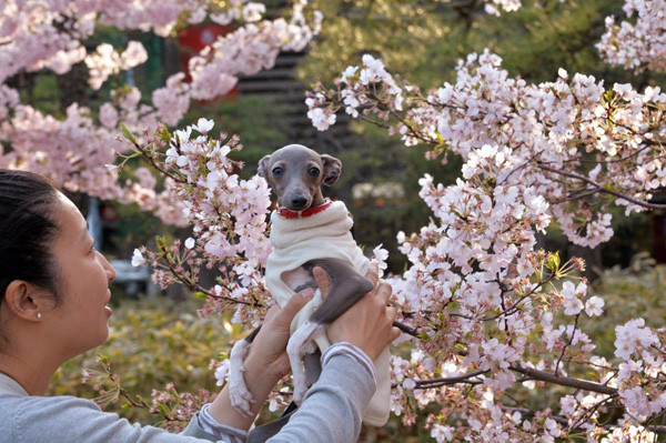 A-woman-holds-up-her-dog-next-to-a-cherry-tree