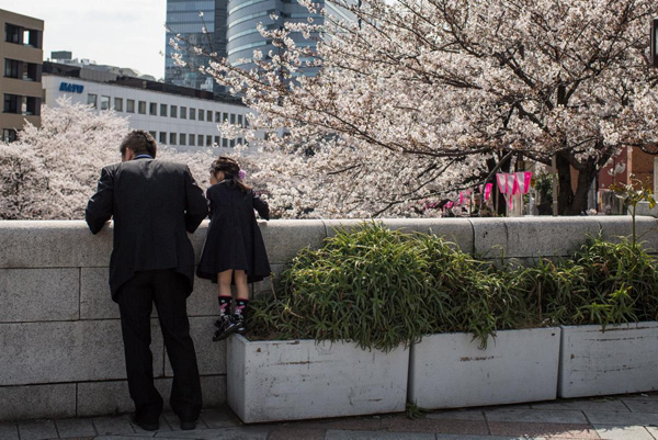 A-young-girl-looks-out-at-cherry-blossoms-in-full-bloom-at-Meguro-River