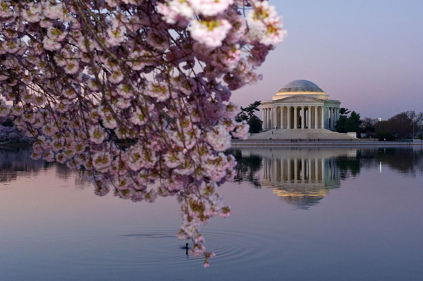Cherry-Blossoms-washington-1