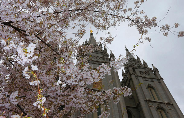 The-Salt-Lake-Temple-is-framed-by-cherry-blossoms