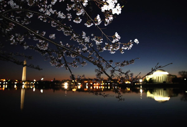 cherry-blossoms-begin-to-bloom-at-the-Tidal-Basin