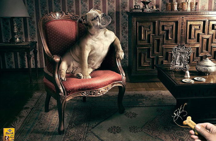 funny-ads-with-animals-13-1