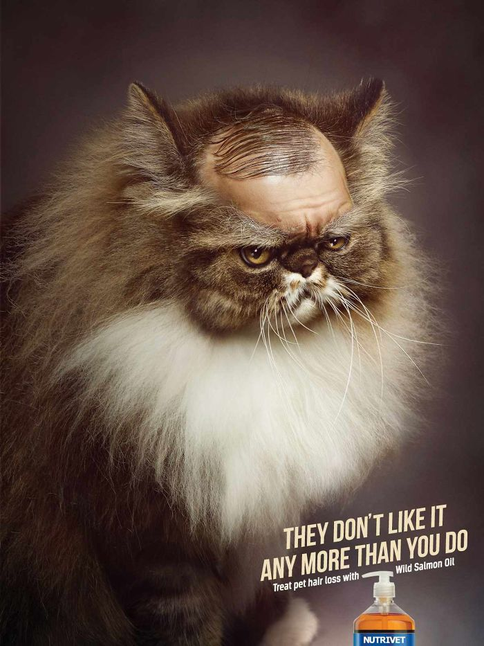 funny-ads-with-animals-19