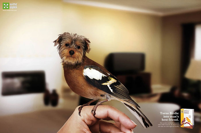 funny-ads-with-animals-20-3