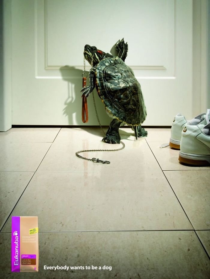 funny-ads-with-animals-21-2