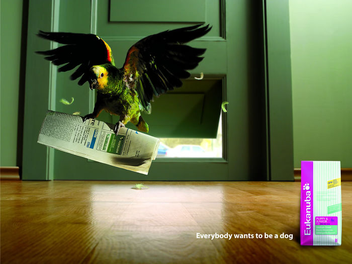 funny-ads-with-animals-22-3