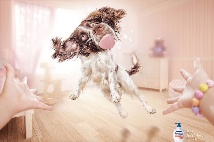 funny-ads-with-animals-9-2