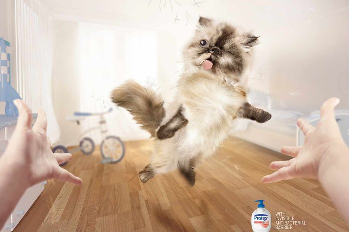 funny-ads-with-animals-9-3