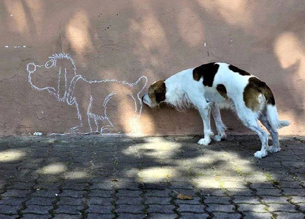 perfectly timed photos-5