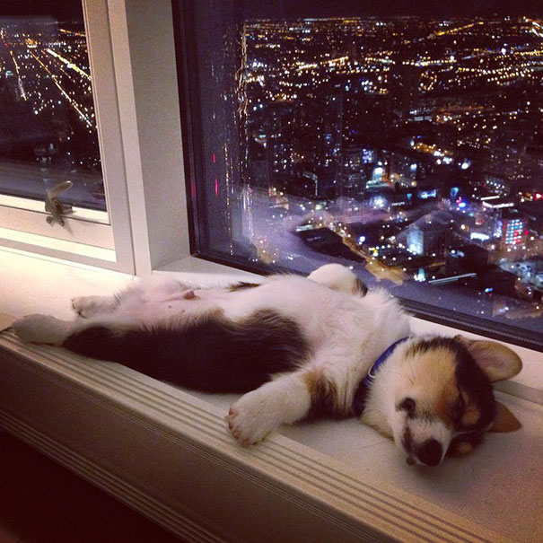 puppy-sleeping-dogs-funny-locations 18