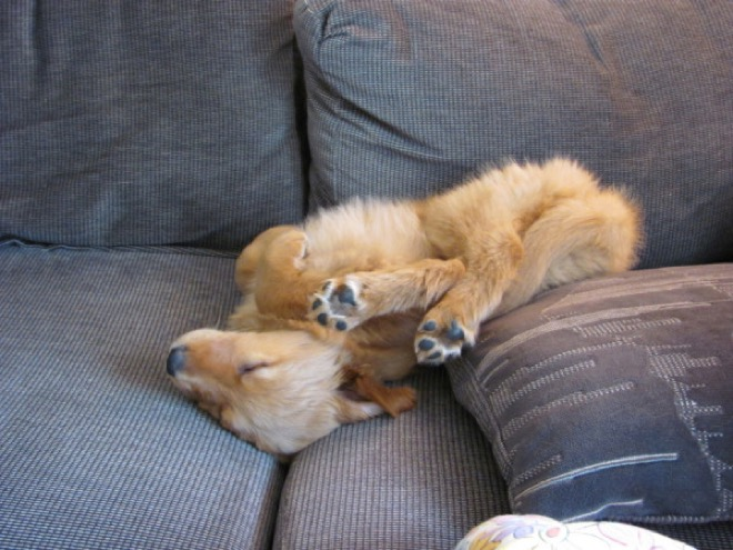 puppy-sleeping-dogs-funny-locations 30