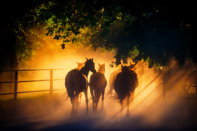 9 A Herd of Horses Back by Andriy Solovyov