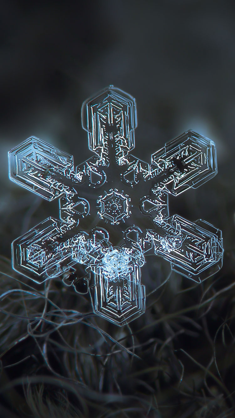 Beautiful Snow flake iPhone 6 wallpaper