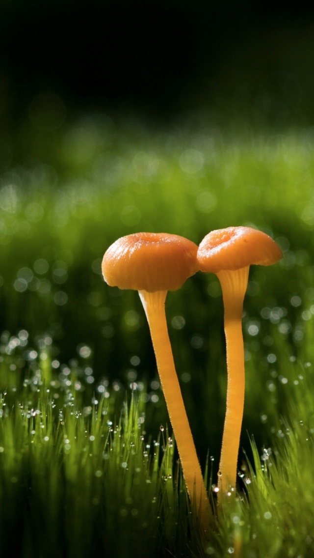Mushroom iPhone 6 iPhone 6 S Plus Wallpaper