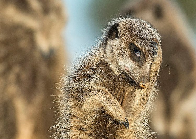 finalists-of-the-2016-comedy-wildlife-photography-awards-11