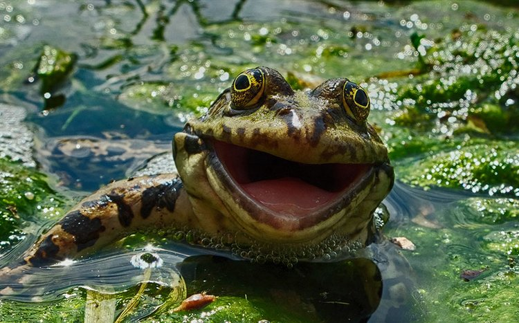 finalists-of-the-2016-comedy-wildlife-photography-awards-2