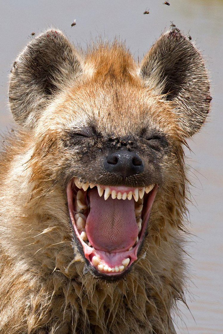 finalists-of-the-2016-comedy-wildlife-photography-awards-26