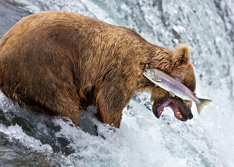 finalists-of-the-2016-comedy-wildlife-photography-awards-28