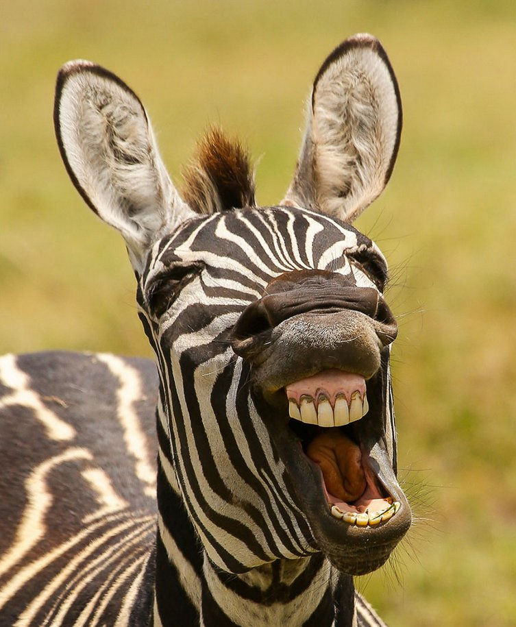 finalists-of-the-2016-comedy-wildlife-photography-awards-38