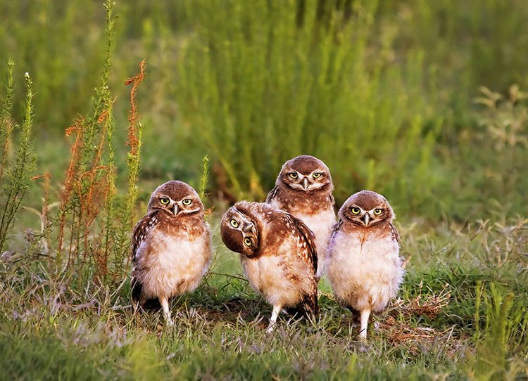finalists-of-the-2016-comedy-wildlife-photography-awards-4