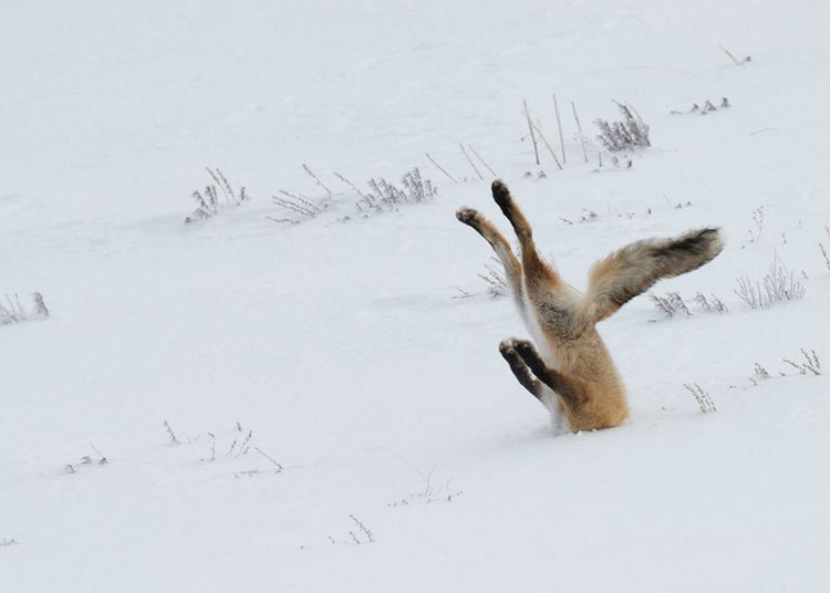 finalists-of-the-2016-comedy-wildlife-photography-awards-5