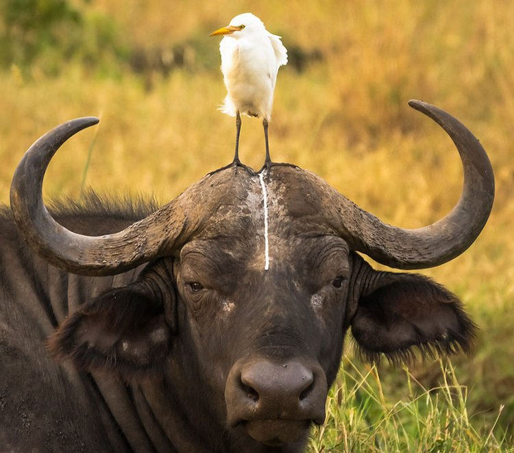 finalists-of-the-2016-comedy-wildlife-photography-awards-6