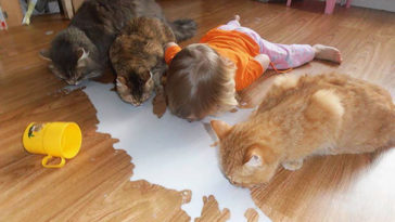 Reasons Why You Shouldn't Leave Your Pets With Kids