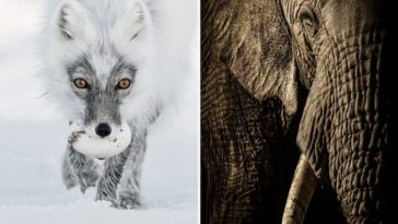 Finalists of the 2017 Wildlife Photographer 1