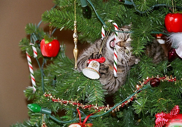 Cats Destroyed Christmas