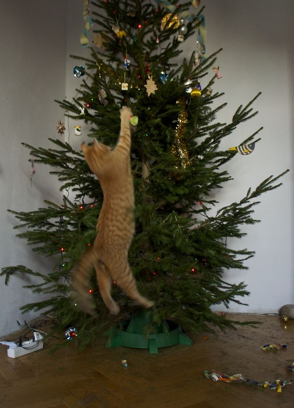 Cats-Destroyed-Christmas