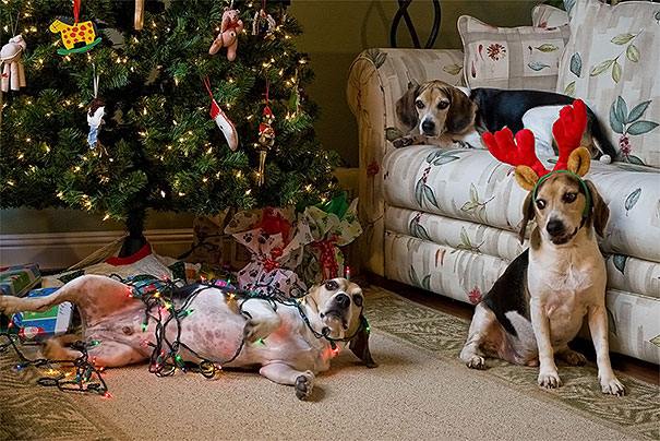 Dogs Destroyed Christmas