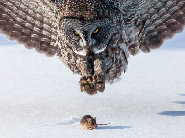 50 Perfectly Timed Photos That Will Mess With Your Head