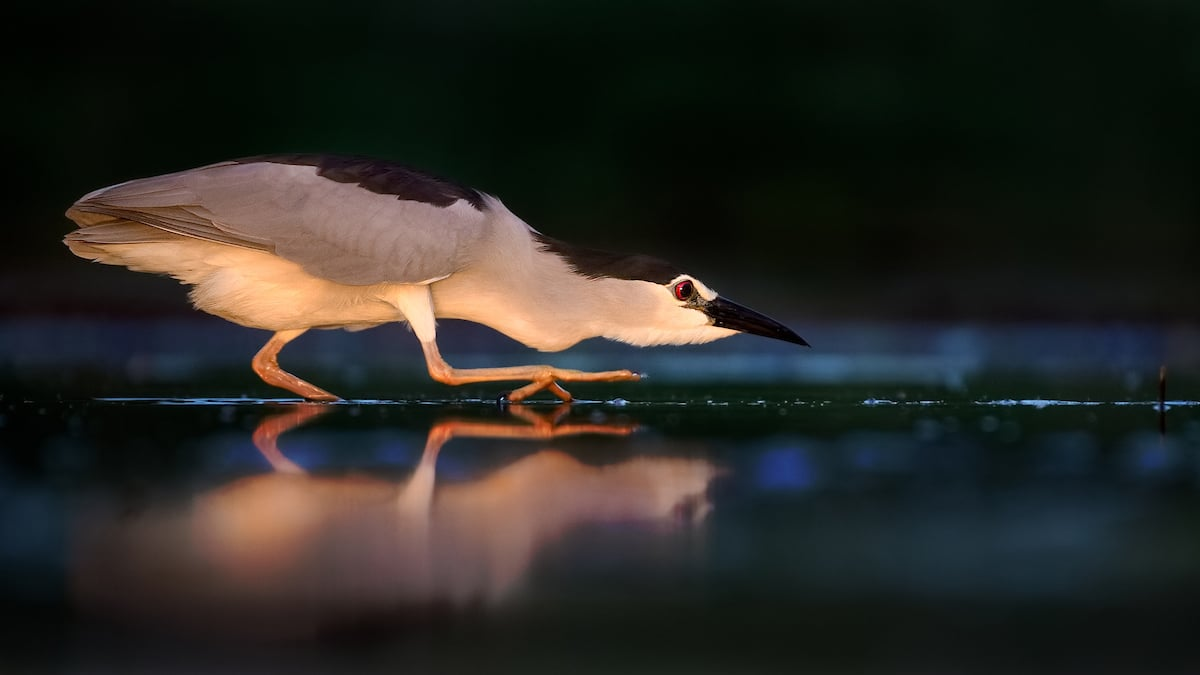 15 Amazing Winners of the 2019 Bird Photographer of the Year Contest