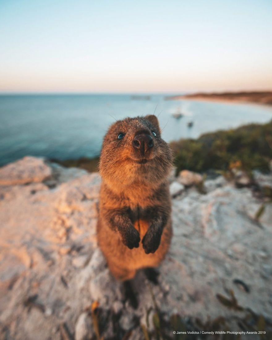 17 Of The Funniest Entries From The 2019 Comedy Wildlife Photography Awards