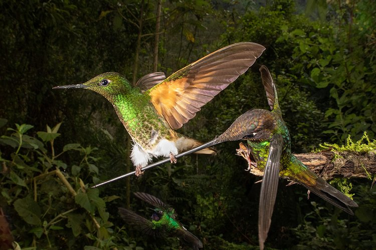 19 Incredible Photos from the Bird Photographer of the Year 2020