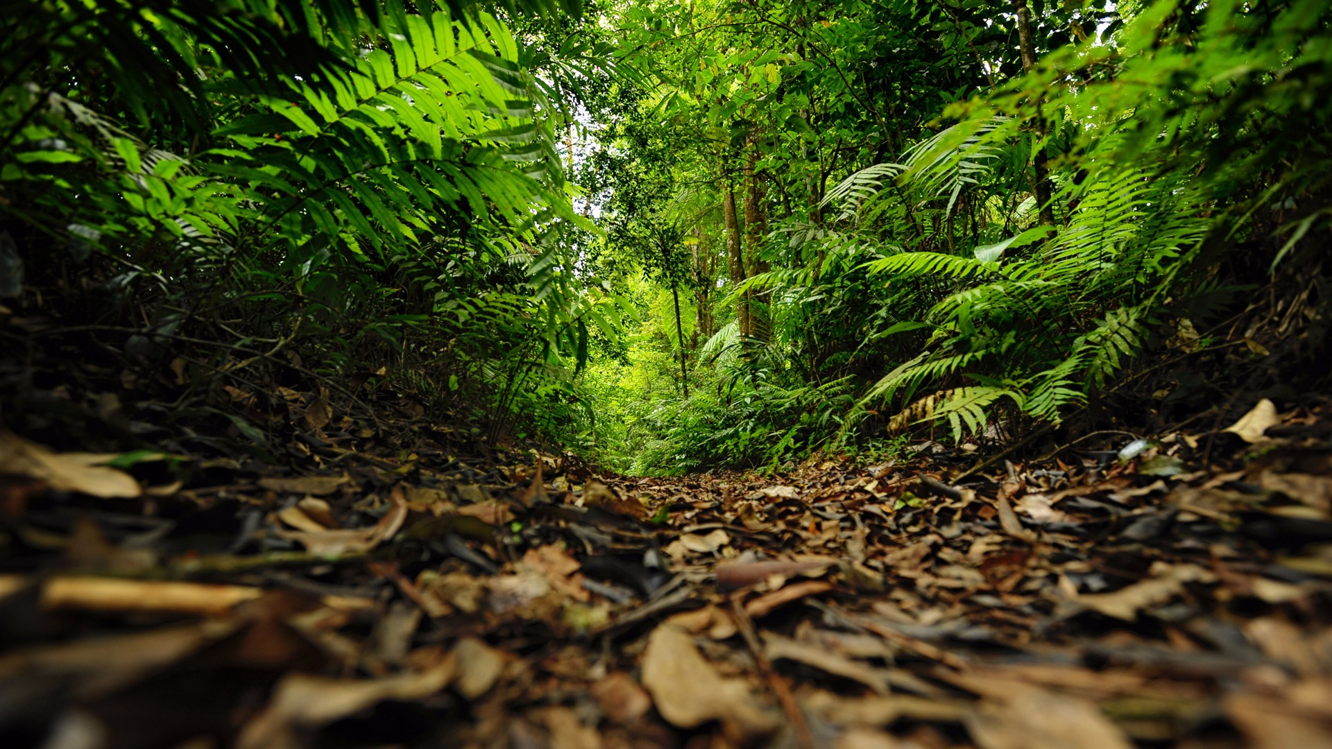 Green Rainforest Path Photography Wallpaper 1920x1080